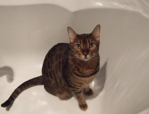 Premier Pet Care for Cats, small animals, birds and fish in Westbourne Park