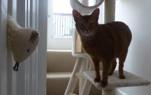 professional-cat-boarding-W10