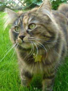 professional-cat-boarding-West-London