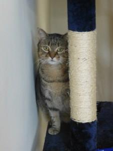 professional-cat-boarding-Westbourne-Park