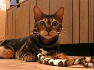 professional-cat-sitting-Maida-Vale