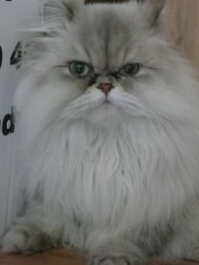 professional-cat-sitting-W11
