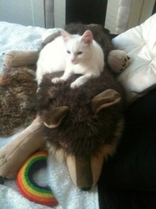 small-animal-and-cat-sitting-Royal-Oak